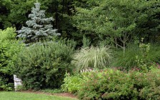 Shrub and grass planting in Woodstock, NY
