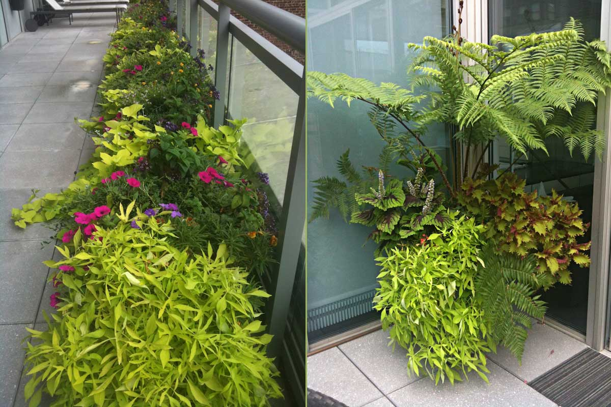 New York City Penthouse Planters