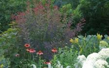 Rhinebeck, NY Summer Garden