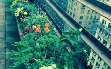 Penthouse Plantings